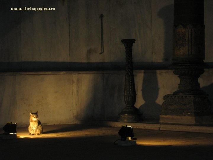 CAT sophia